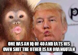 EZ ONE HAS AN IQ OF 40 AND EATS HIS OWN SHIT THE OTHER IS AN ORANGUTAN | image tagged in donald trump,orangutan | made w/ Imgflip meme maker