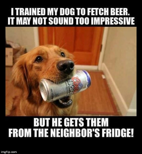 fetch buddy | image tagged in funny dog memes,funny dog,beer,i could use a drink | made w/ Imgflip meme maker