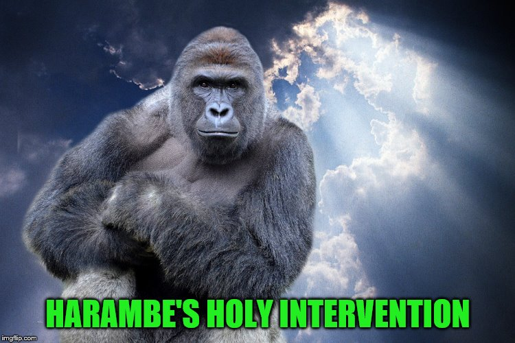 HARAMBE'S HOLY INTERVENTION | made w/ Imgflip meme maker