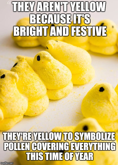 Pollen Peeps | THEY AREN'T YELLOW BECAUSE IT'S BRIGHT AND FESTIVE THEY'RE YELLOW TO SYMBOLIZE POLLEN COVERING EVERYTHING THIS TIME OF YEAR | image tagged in allergies,peeps,easter,happy easter,sneeze,marshmallow | made w/ Imgflip meme maker