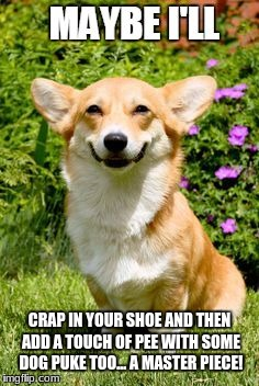 CRAP IN YOUR SHOE AND THEN ADD A TOUCH OF PEE WITH SOME DOG PUKE TOO... A MASTER PIECE! | image tagged in mischievous corgi maybe i'll | made w/ Imgflip meme maker