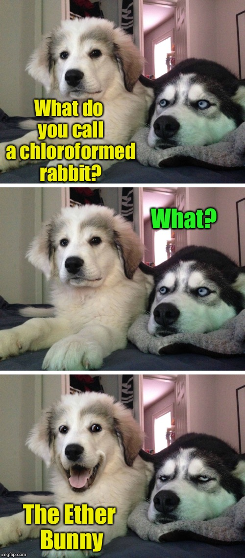 Bad Pun Dogs | What do you call a chloroformed rabbit? The Ether Bunny What? | image tagged in bad pun dogs,memes,easter bunny,bad pun,happy easter,easter | made w/ Imgflip meme maker