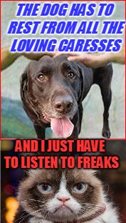 THE DOG HAS TO REST FROM ALL THE LOVING CARESSES AND I JUST HAVE TO LISTEN TO FREAKS | made w/ Imgflip meme maker
