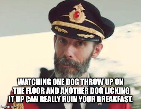 Captain Obvious | WATCHING ONE DOG THROW UP ON THE FLOOR AND ANOTHER DOG LICKING IT UP CAN REALLY RUIN YOUR BREAKFAST. | image tagged in captain obvious | made w/ Imgflip meme maker