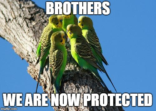 The Meeting | BROTHERS WE ARE NOW PROTECTED | image tagged in the meeting | made w/ Imgflip meme maker