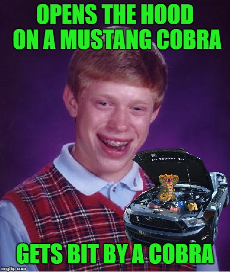 Brian at a car lot | OPENS THE HOOD ON A MUSTANG COBRA GETS BIT BY A COBRA | image tagged in memes,bad luck brian,ford mustang,cobra,snake | made w/ Imgflip meme maker