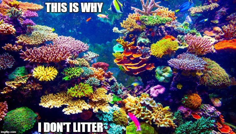 Nature | THIS IS WHY I DON'T LITTER | image tagged in memes | made w/ Imgflip meme maker