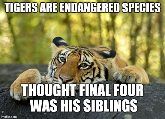 TIGERS ARE ENDANGERED SPECIES THOUGHT FINAL FOUR WAS HIS SIBLINGS | image tagged in sad tiger | made w/ Imgflip meme maker