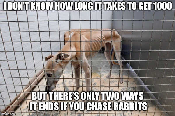 I DON'T KNOW HOW LONG IT TAKES TO GET 1000 BUT THERE'S ONLY TWO WAYS IT ENDS IF YOU CHASE RABBITS | made w/ Imgflip meme maker