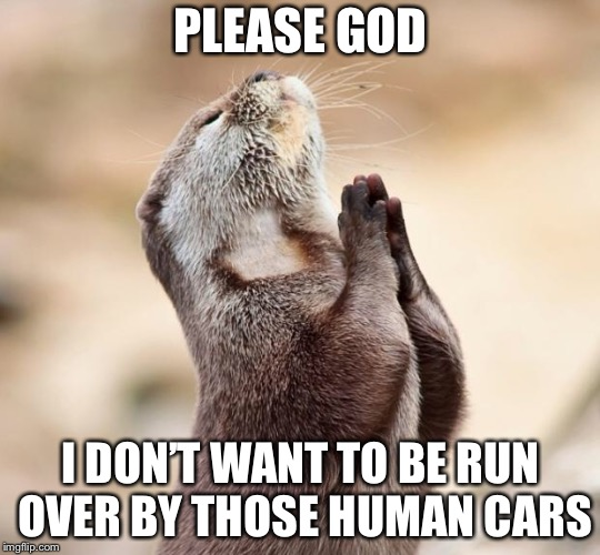 animal praying | PLEASE GOD I DON'T WANT TO BE RUN OVER BY THOSE HUMAN CARS | image tagged in animal praying | made w/ Imgflip meme maker