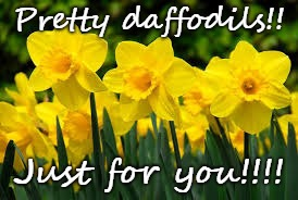 Pretty daffodils!! Just for you!!!! | image tagged in daffodils | made w/ Imgflip meme maker