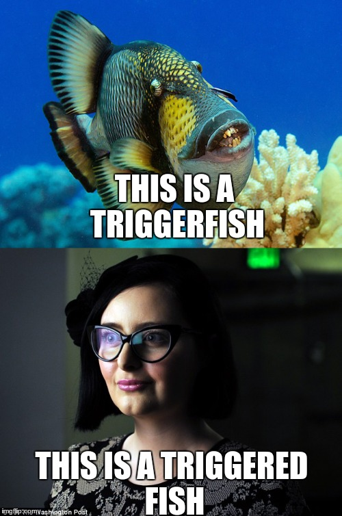 Something Fishy | THIS IS A TRIGGERFISH THIS IS A TRIGGERED FISH | image tagged in fish,triggered,triggered feminist,liberals | made w/ Imgflip meme maker