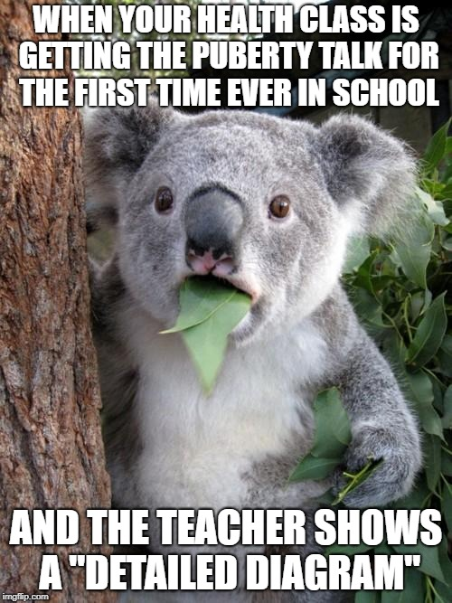 "Surprised Koala |  WHEN YOUR HEALTH CLASS IS GETTING THE PUBERTY TALK FOR THE FIRST TIME EVER IN SCHOOL; AND THE TEACHER SHOWS A ""DETAILED DIAGRAM"" 