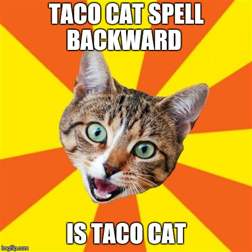Bad Advice Cat |  TACO CAT SPELL BACKWARD; IS TACO CAT | image tagged in memes,bad advice cat | made w/ Imgflip meme maker