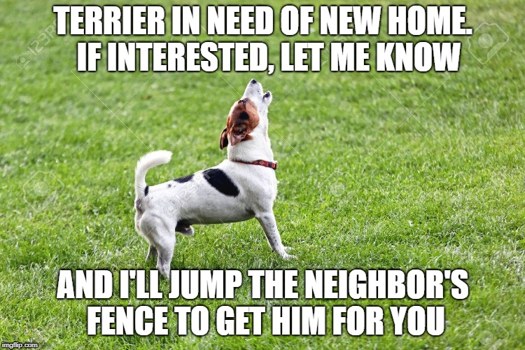 Need to rehome | TERRIER IN NEED OF NEW HOME.  IF INTERESTED, LET ME KNOW AND I'LL JUMP THE NEIGHBOR'S FENCE TO GET HIM FOR YOU | image tagged in pit bull,dog | made w/ Imgflip meme maker