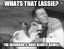 WHATS THAT LASSIE? THE NEIGHBOR'S  HAVE BLUNTS ASWELL | made w/ Imgflip meme maker
