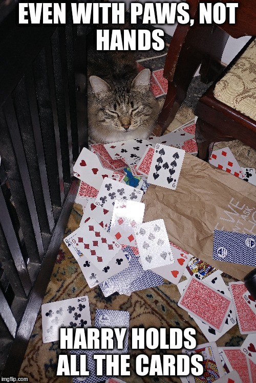 harry holds the cards | EVEN WITH PAWS, NOT HANDS HARRY HOLDS ALL THE CARDS | image tagged in cat,cards | made w/ Imgflip meme maker