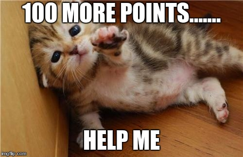 So close!!!!! | 100 MORE POINTS....... HELP ME | image tagged in help me kitten | made w/ Imgflip meme maker
