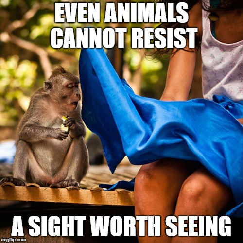 Perfectly Timed |  EVEN ANIMALS CANNOT RESIST; A SIGHT WORTH SEEING | image tagged in memes,funny,animals,sight,monkey,resist | made w/ Imgflip meme maker