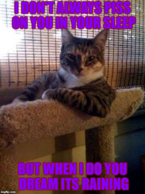 The Most Interesting Cat In The World Meme | I DON'T ALWAYS PISS ON YOU IN YOUR SLEEP BUT WHEN I DO YOU DREAM ITS RAINING | image tagged in memes,the most interesting cat in the world | made w/ Imgflip meme maker