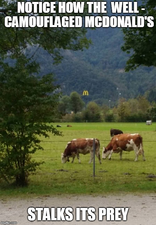 You Won't See This On Nat Geo Wild | - | image tagged in mcdonalds,cows,funny meme | made w/ Imgflip meme maker