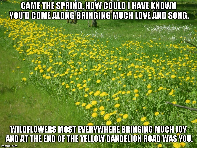 Yellow Dandelion Road | CAME THE SPRING, HOW COULD I HAVE KNOWN YOU'D COME ALONG BRINGING MUCH LOVE AND SONG. WILDFLOWERS MOST EVERYWHERE BRINGING MUCH JOY AND AT T | image tagged in dandelions,love,song,joy | made w/ Imgflip meme maker