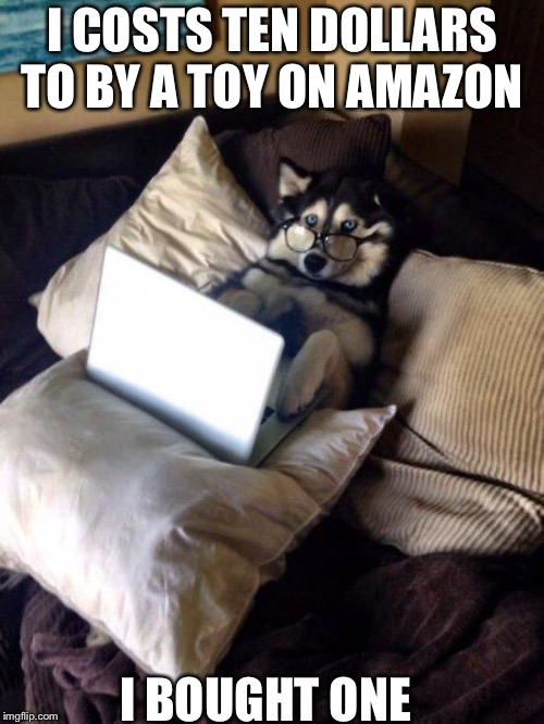 Husky Study | I COSTS TEN DOLLARS TO BY A TOY ON AMAZON I BOUGHT ONE | image tagged in husky study | made w/ Imgflip meme maker
