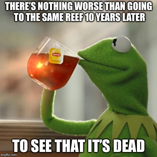But Thats None Of My Business Meme | THERE'S NOTHING WORSE THAN GOING TO THE SAME REEF 10 YEARS LATER TO SEE THAT IT'S DEAD | image tagged in memes,but thats none of my business,kermit the frog | made w/ Imgflip meme maker