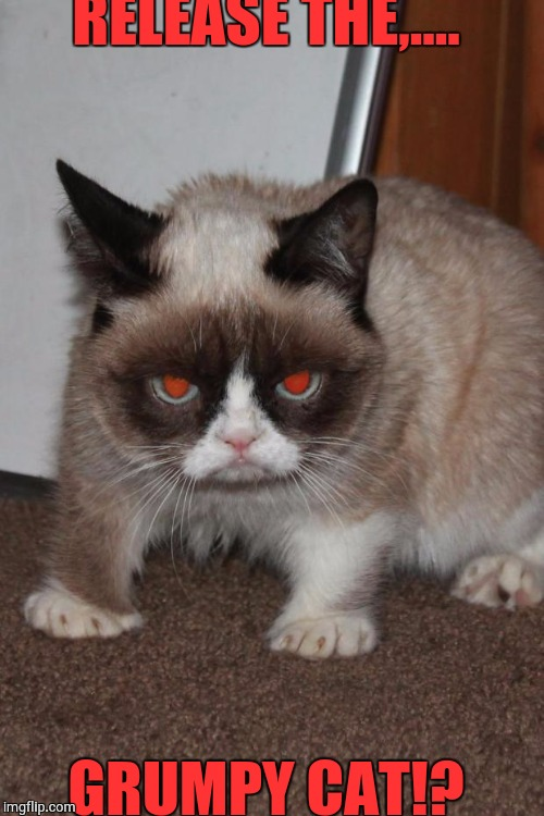 Grumpy Cat red eyes | RELEASE THE,.... GRUMPY CAT!? | image tagged in grumpy cat red eyes | made w/ Imgflip meme maker