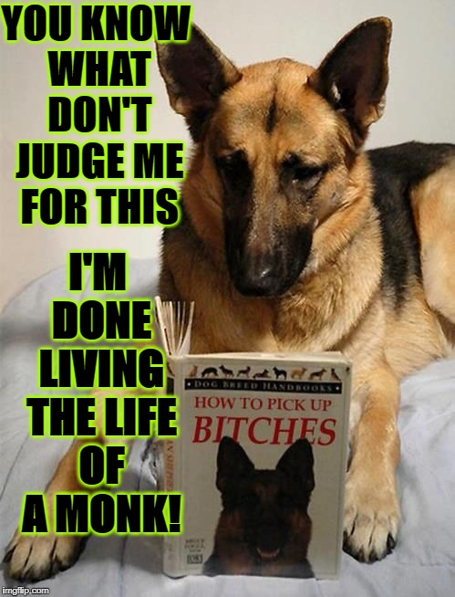 YOU KNOW WHAT DON'T JUDGE ME FOR THIS I'M DONE LIVING THE LIFE OF A MONK! | image tagged in desperate dog | made w/ Imgflip meme maker