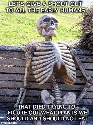 Shout Out For Plant Pioneers | LET'S GIVE A SHOUT OUT TO ALL THE EARLY HUMANS THAT DIED TRYING TO FIGURE OUT WHAT PLANTS WE SHOULD AND SHOULD NOT EAT | image tagged in memes,waiting skeleton,plants,poison,food | made w/ Imgflip meme maker