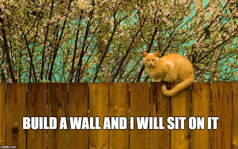 Cat on the Wall  | BUILD A WALL AND I WILL SIT ON IT | image tagged in cat on fence,wall,sit on wall,build a wall | made w/ Imgflip meme maker