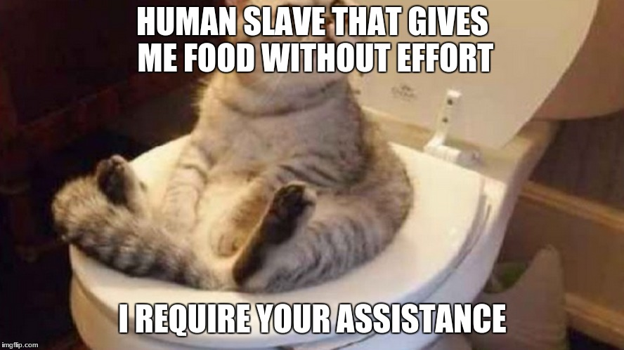 cats think we are slave most of the time XD | HUMAN SLAVE THAT GIVES ME FOOD WITHOUT EFFORT I REQUIRE YOUR ASSISTANCE | image tagged in cats | made w/ Imgflip meme maker