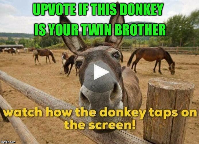 He is my twin  | UPVOTE IF THIS DONKEY IS YOUR TWIN BROTHER | image tagged in memes,gifs,imgflip,meanwhile on imgflip,latest | made w/ Imgflip meme maker