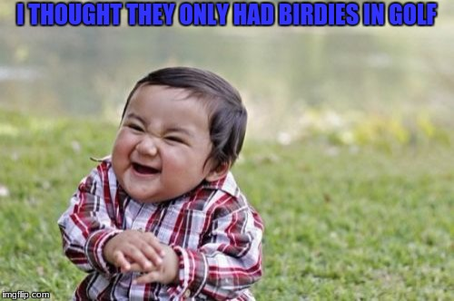 Evil Toddler Meme | I THOUGHT THEY ONLY HAD BIRDIES IN GOLF | image tagged in memes,evil toddler | made w/ Imgflip meme maker