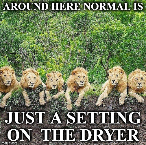 AROUND HERE NORMAL IS JUST A SETTING ON  THE DRYER | image tagged in lion1 | made w/ Imgflip meme maker
