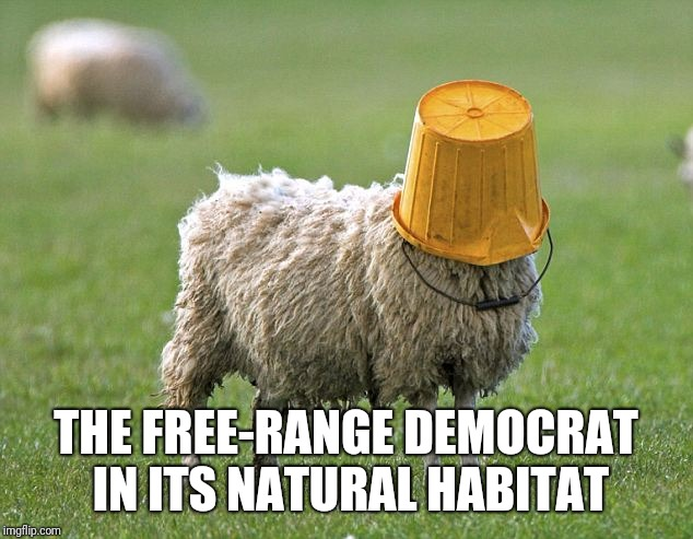 stupid sheep | THE FREE-RANGE DEMOCRAT IN ITS NATURAL HABITAT | image tagged in stupid sheep,democrat,liberal | made w/ Imgflip meme maker