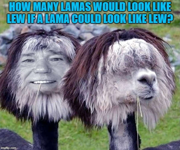 how many lamas would look like lew | HOW MANY LAMAS WOULD LOOK LIKE LEW IF A LAMA COULD LOOK LIKE LEW? | image tagged in woodchuck | made w/ Imgflip meme maker