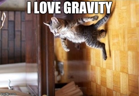 Cool Cat Stroll Meme | I LOVE GRAVITY | image tagged in memes,cool cat stroll | made w/ Imgflip meme maker