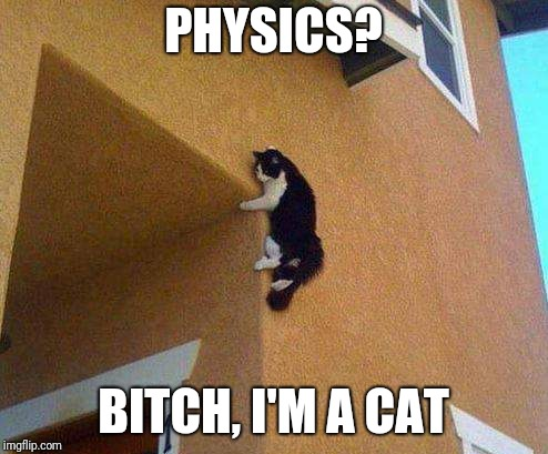 PHYSICS? B**CH, I'M A CAT | image tagged in cat,physics | made w/ Imgflip meme maker