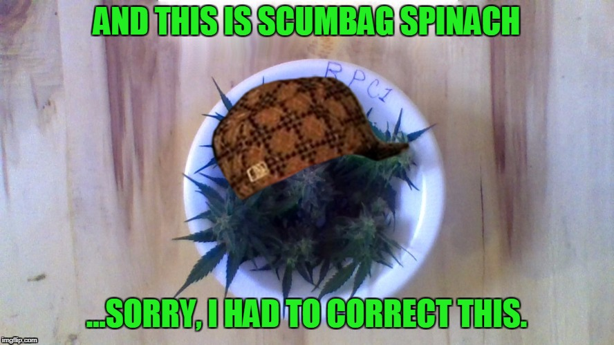 weed in porcellain | AND THIS IS SCUMBAG SPINACH ...SORRY, I HAD TO CORRECT THIS. | image tagged in weed in porcellain,scumbag | made w/ Imgflip meme maker