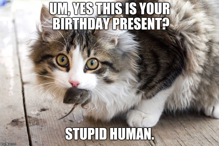 UM, YES THIS IS YOUR BIRTHDAY PRESENT? STUPID HUMAN. | image tagged in stupid human | made w/ Imgflip meme maker