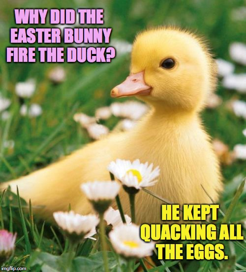WHY DID THE EASTER BUNNY FIRE THE DUCK? HE KEPT QUACKING ALL THE EGGS. | image tagged in easter,happy easter | made w/ Imgflip meme maker