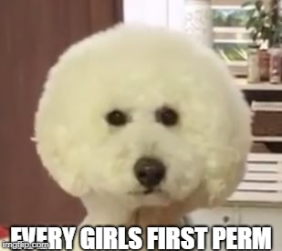 EVERY GIRLS FIRST PERM | image tagged in funny,girls,funny memes,dogs | made w/ Imgflip meme maker