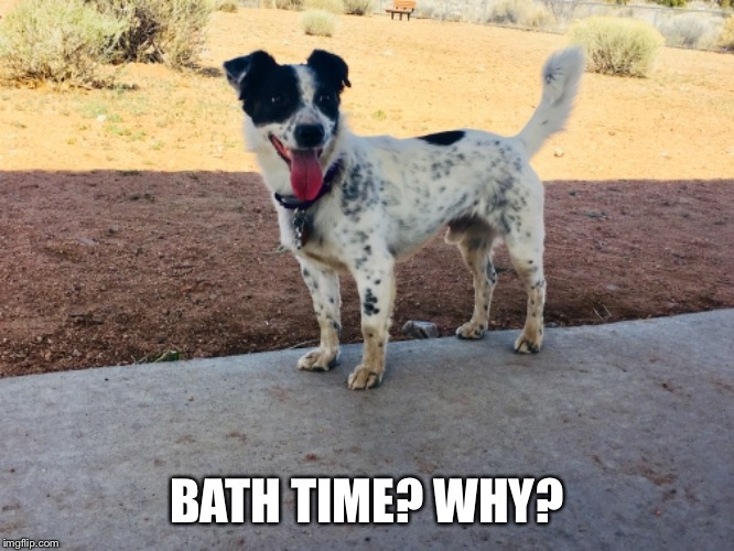BATH TIME? WHY? | image tagged in bath time | made w/ Imgflip meme maker