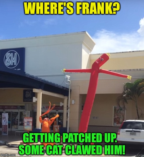 WHERE'S FRANK? GETTING PATCHED UP.  SOME CAT CLAWED HIM! | made w/ Imgflip meme maker