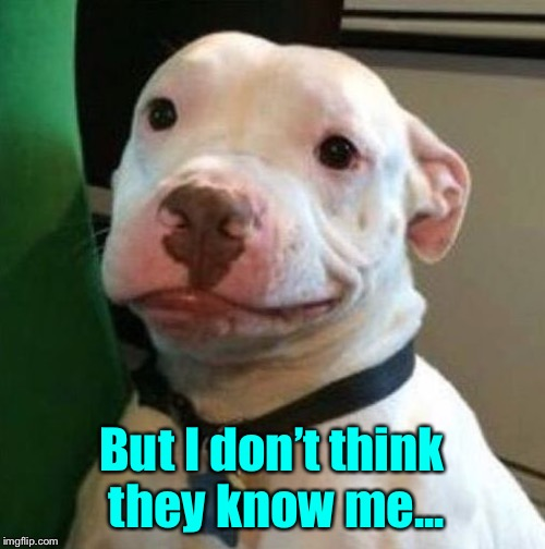 Awkward Dog | But I don't think they know me... | image tagged in awkward dog | made w/ Imgflip meme maker