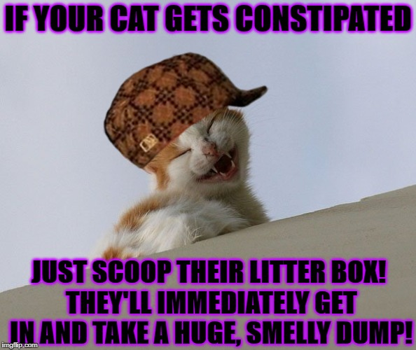 IF YOUR CAT GETS CONSTIPATED JUST SCOOP THEIR LITTER BOX! THEY'LL IMMEDIATELY GET IN AND TAKE A HUGE, SMELLY DUMP! | image tagged in fartsy cat,scumbag | made w/ Imgflip meme maker
