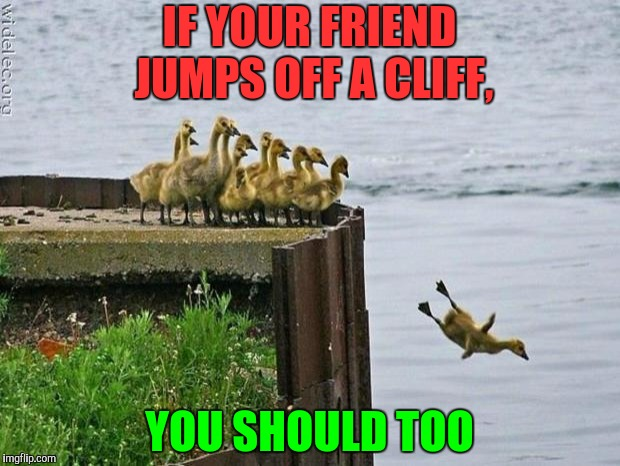 baby ducks | IF YOUR FRIEND JUMPS OFF A CLIFF, YOU SHOULD TOO | image tagged in baby ducks | made w/ Imgflip meme maker