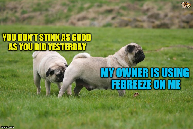 YOU DON'T STINK AS GOOD AS YOU DID YESTERDAY MY OWNER IS USING FEBREEZE ON ME | made w/ Imgflip meme maker